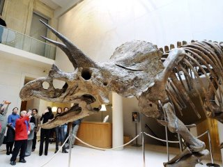triceratops1.jpg